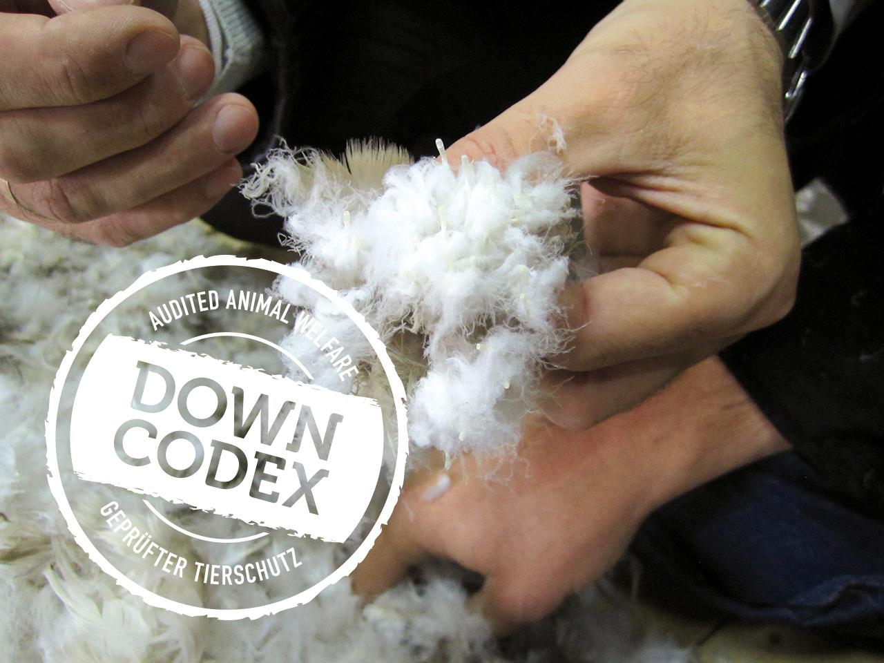 DOWN CODEX